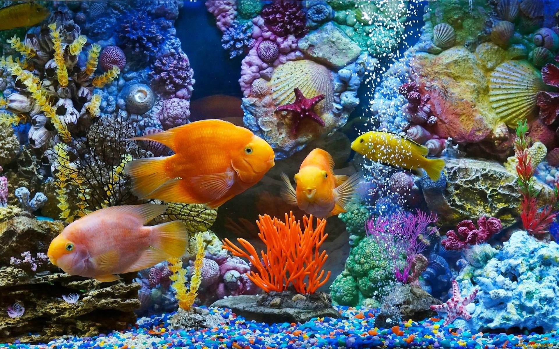 обои для рабочего стола рыбки в аквариуме живые друг друга, очаг